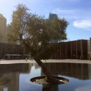 Marina Beach - Tree in the Water