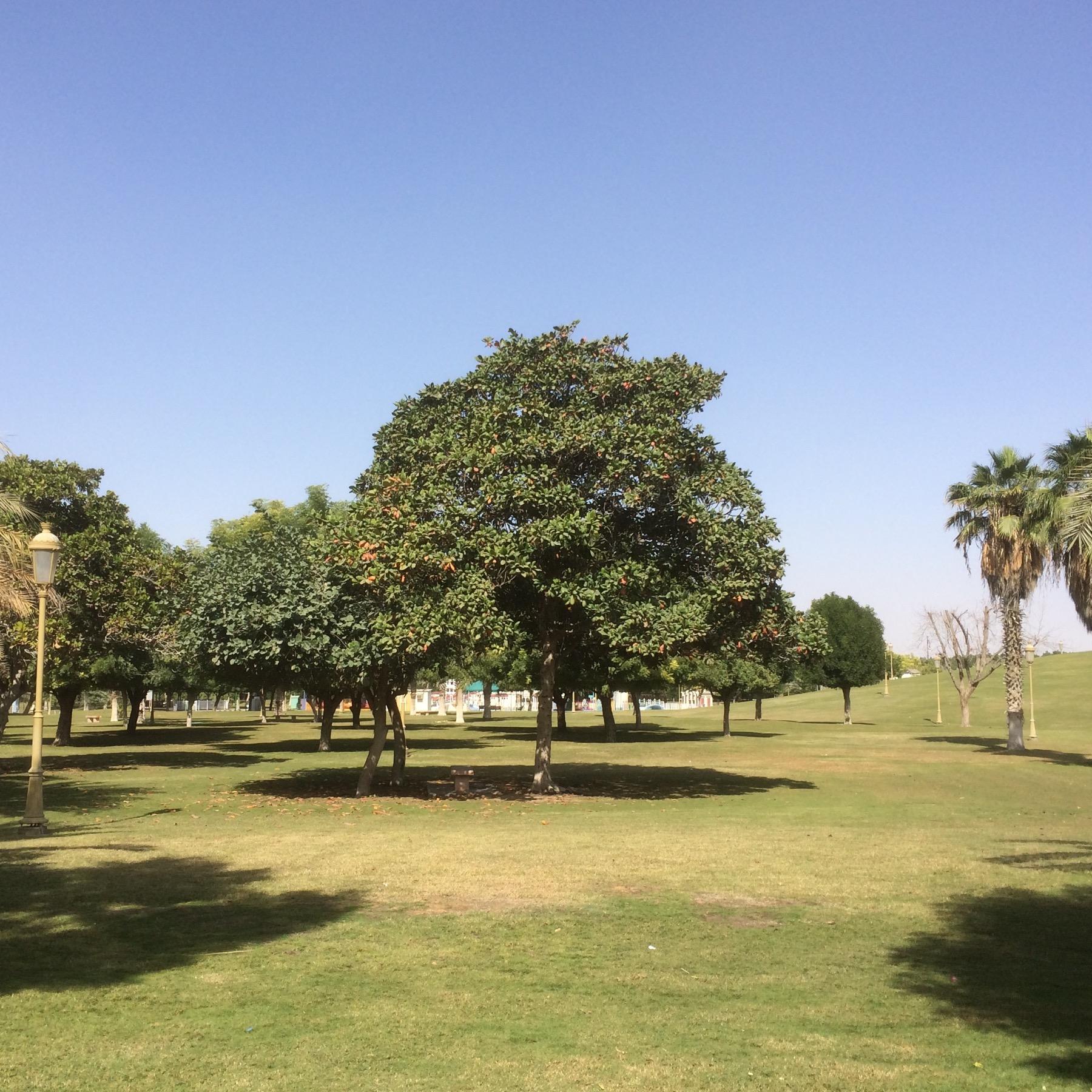 Sharjah National Park - 4