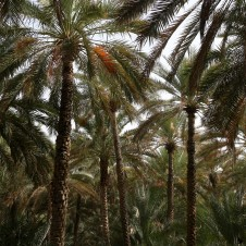 and many palm trees